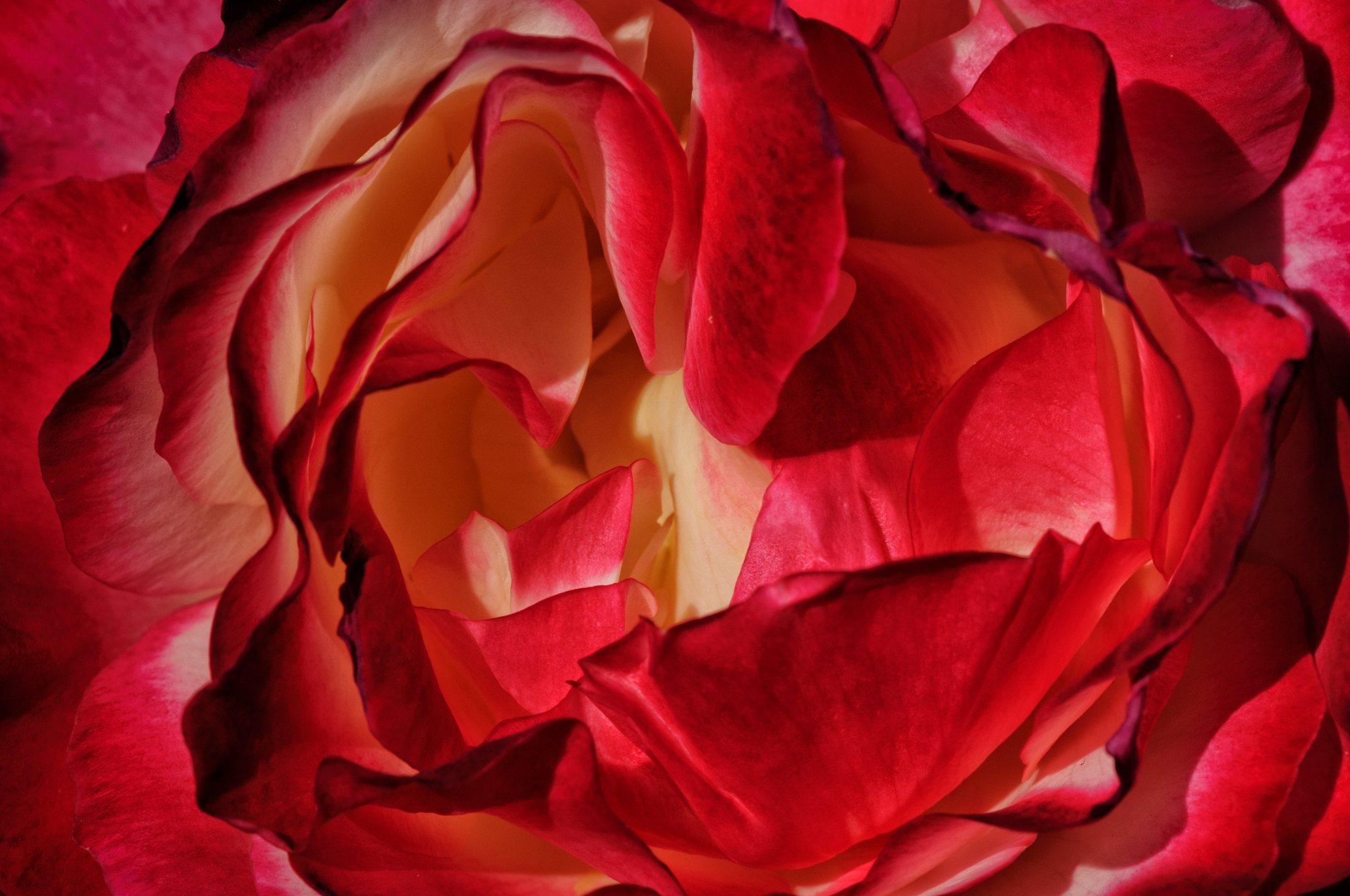 bronces_fleurs-1.jpg