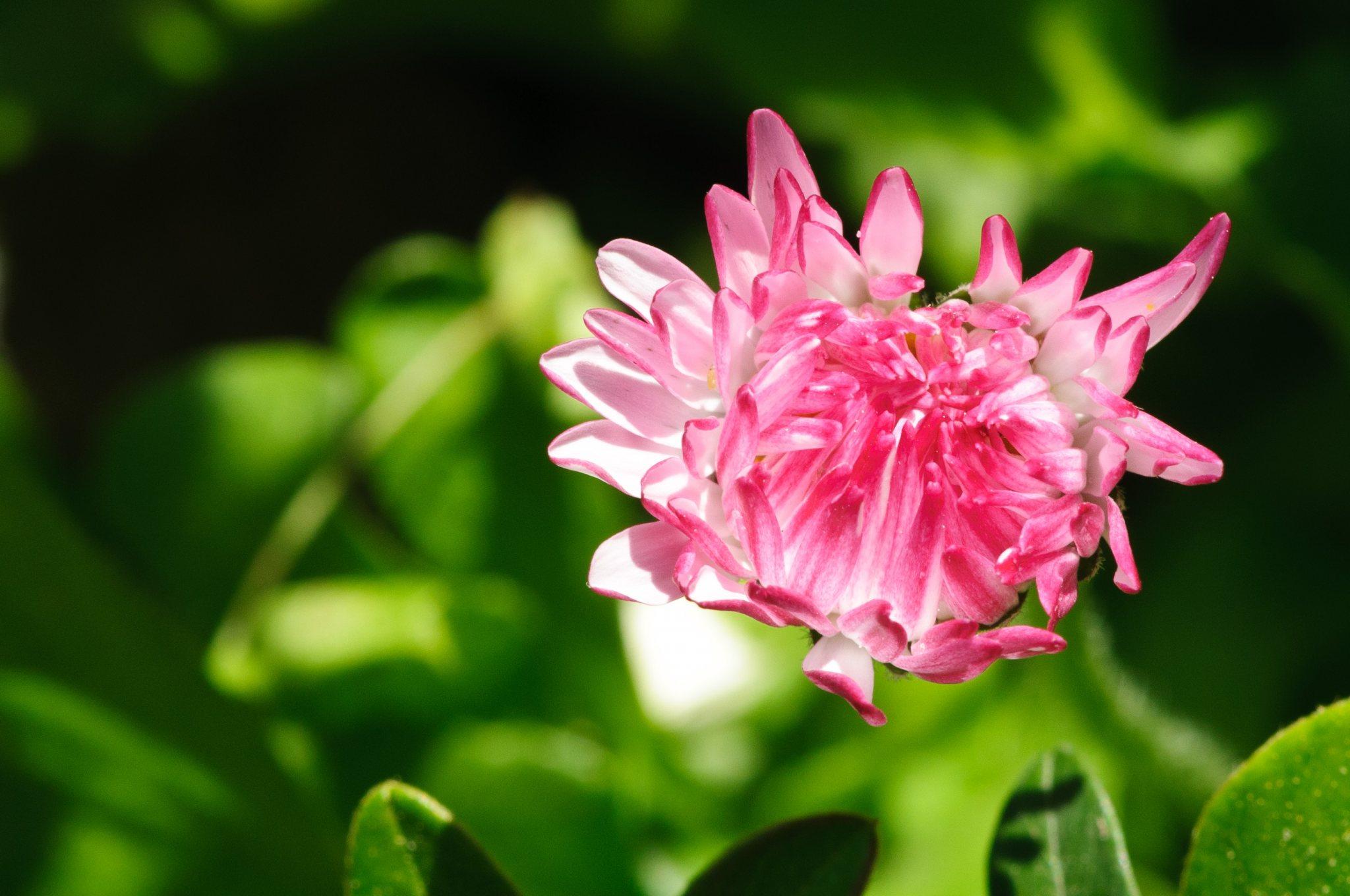 bronces_fleurs-10.jpg