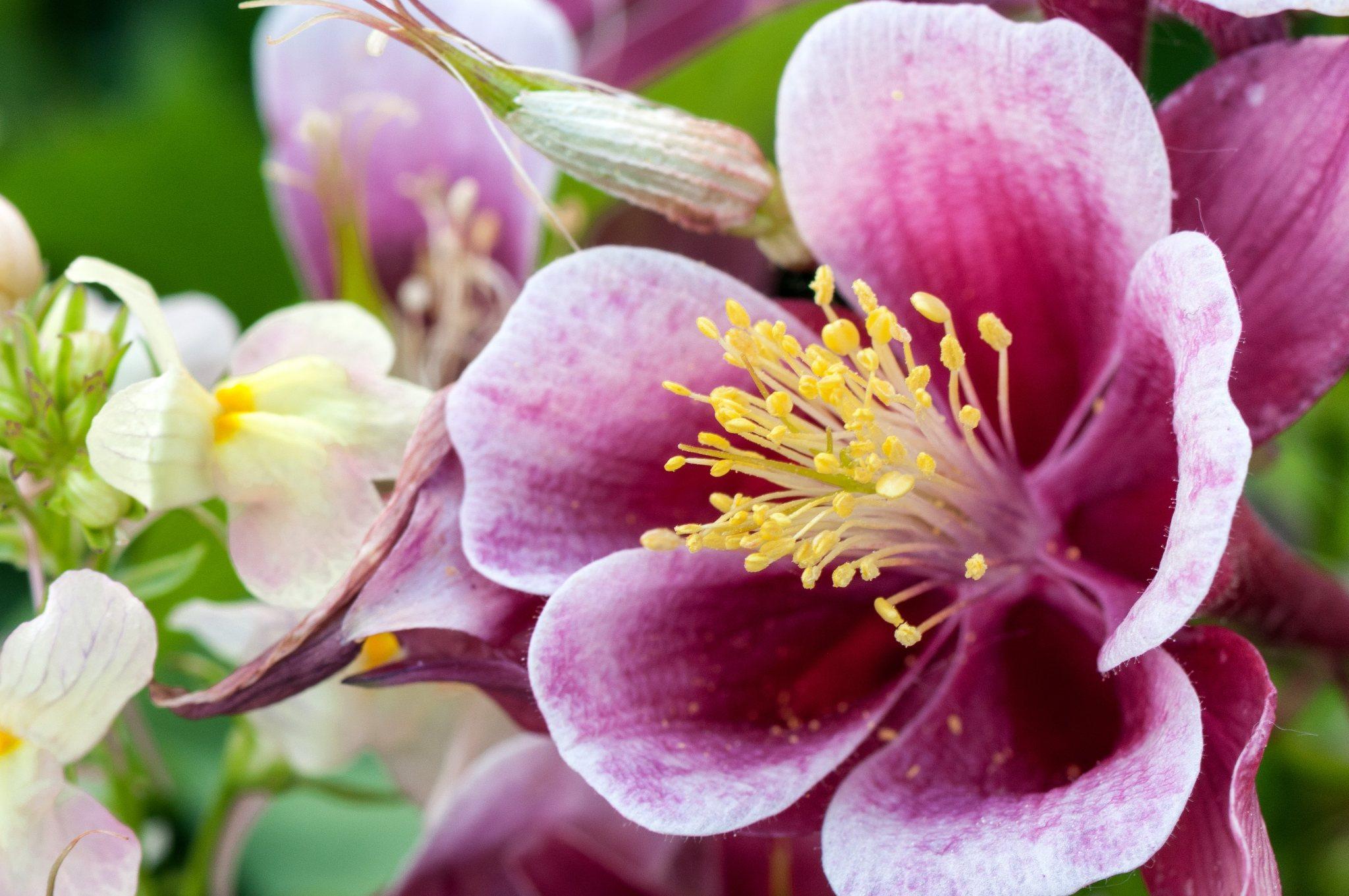 bronces_fleurs-12.jpg