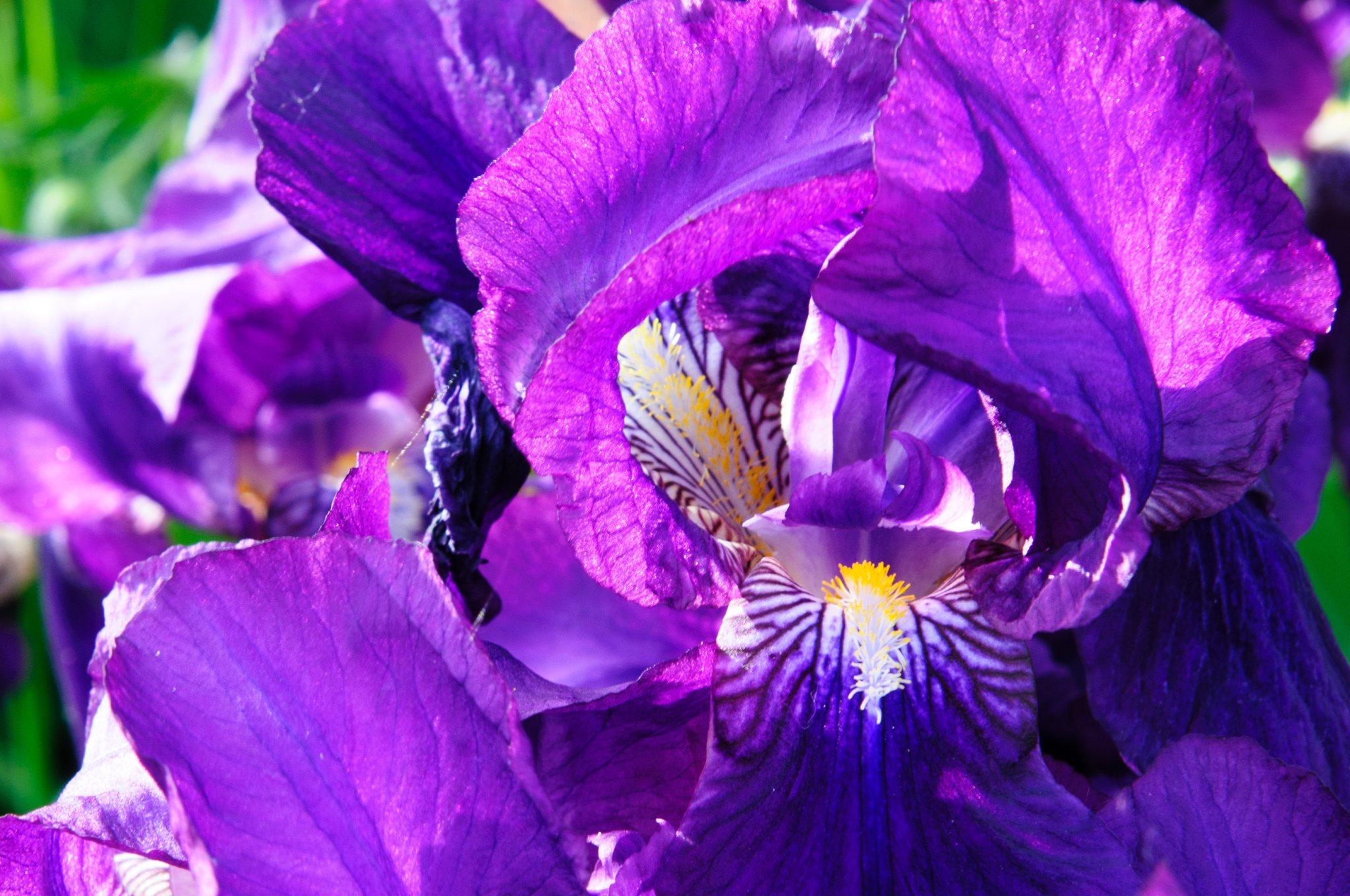 bronces_fleurs-13.jpg