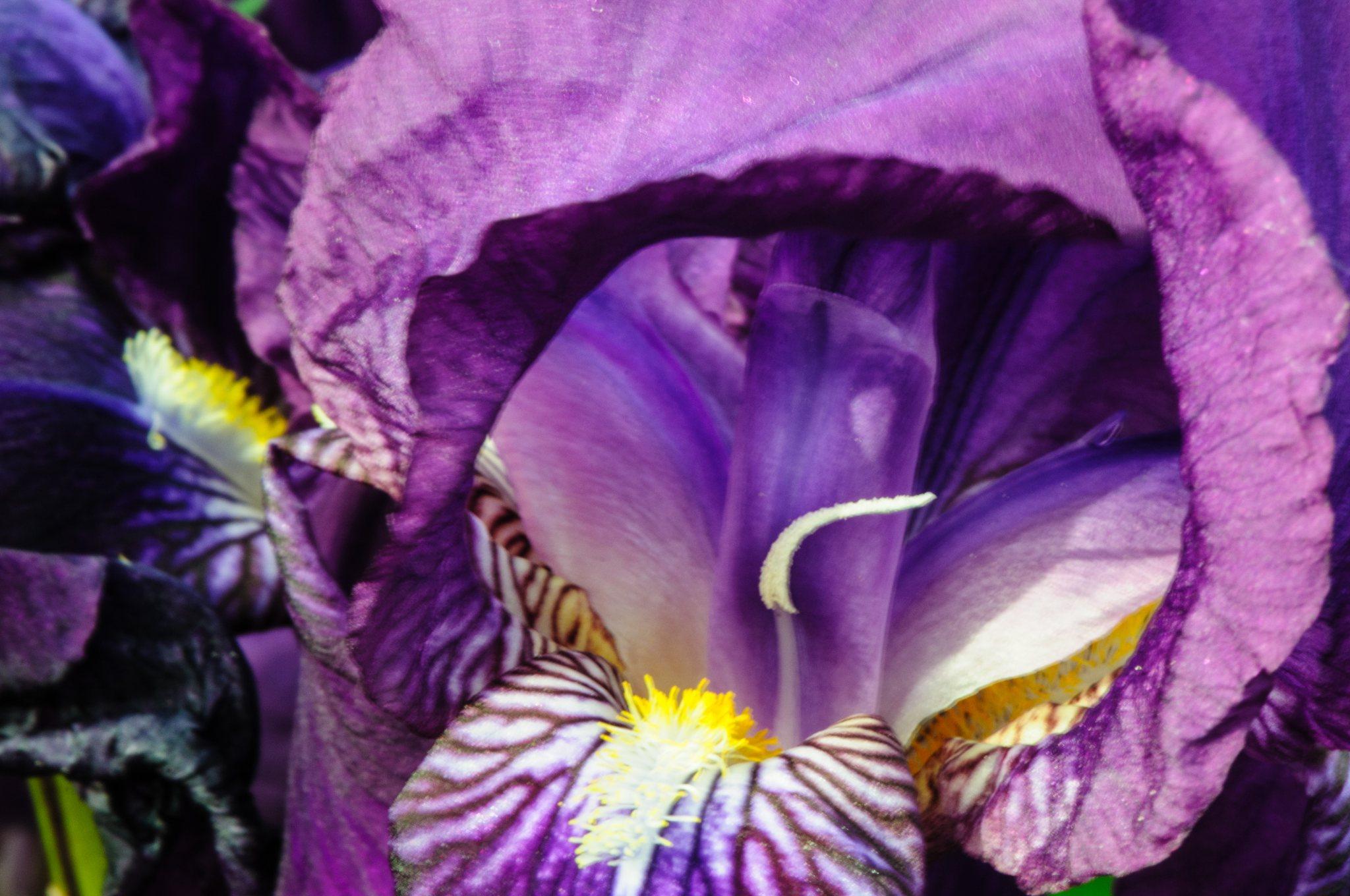 bronces_fleurs-15.jpg