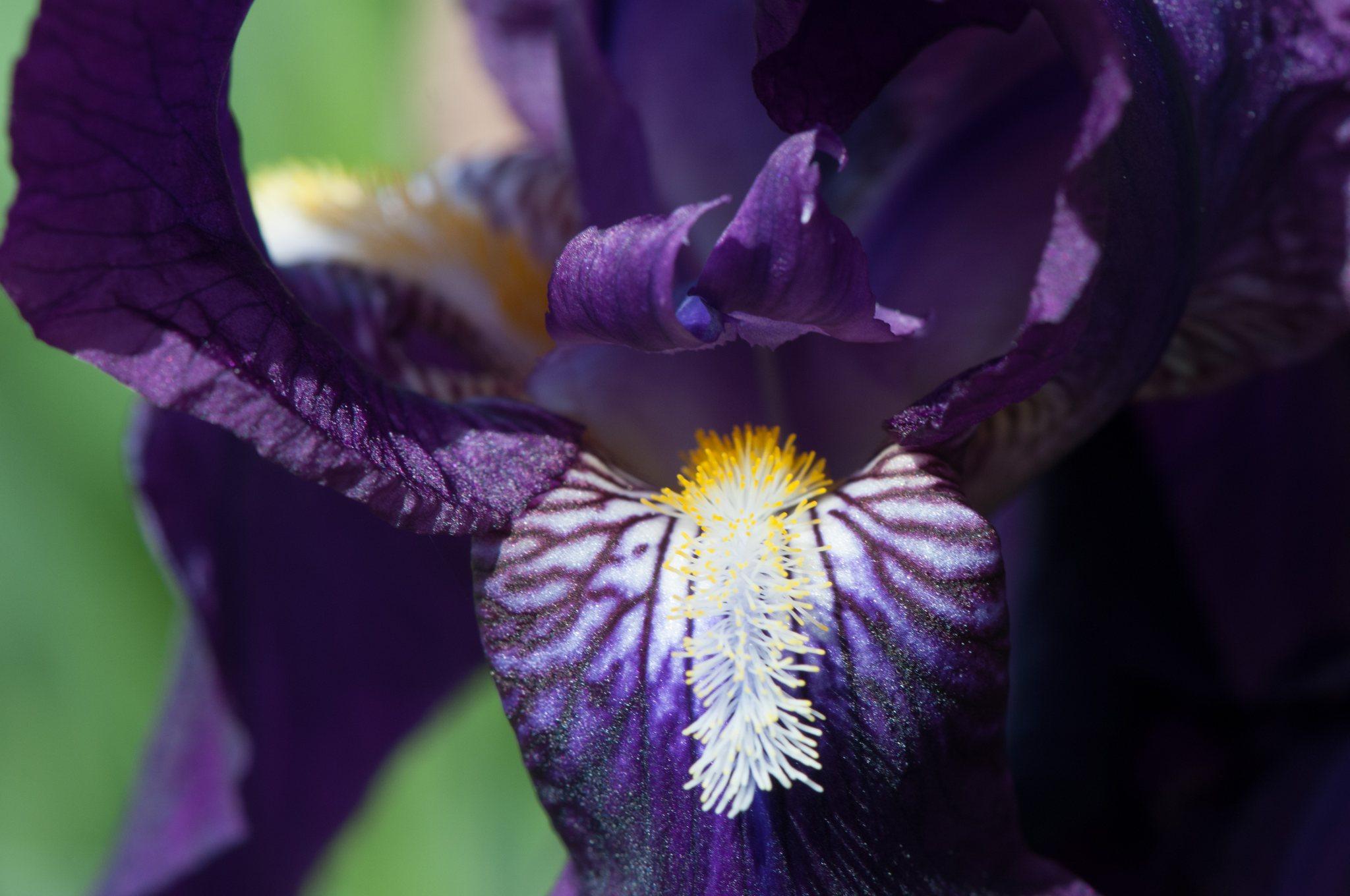 bronces_fleurs-16.jpg