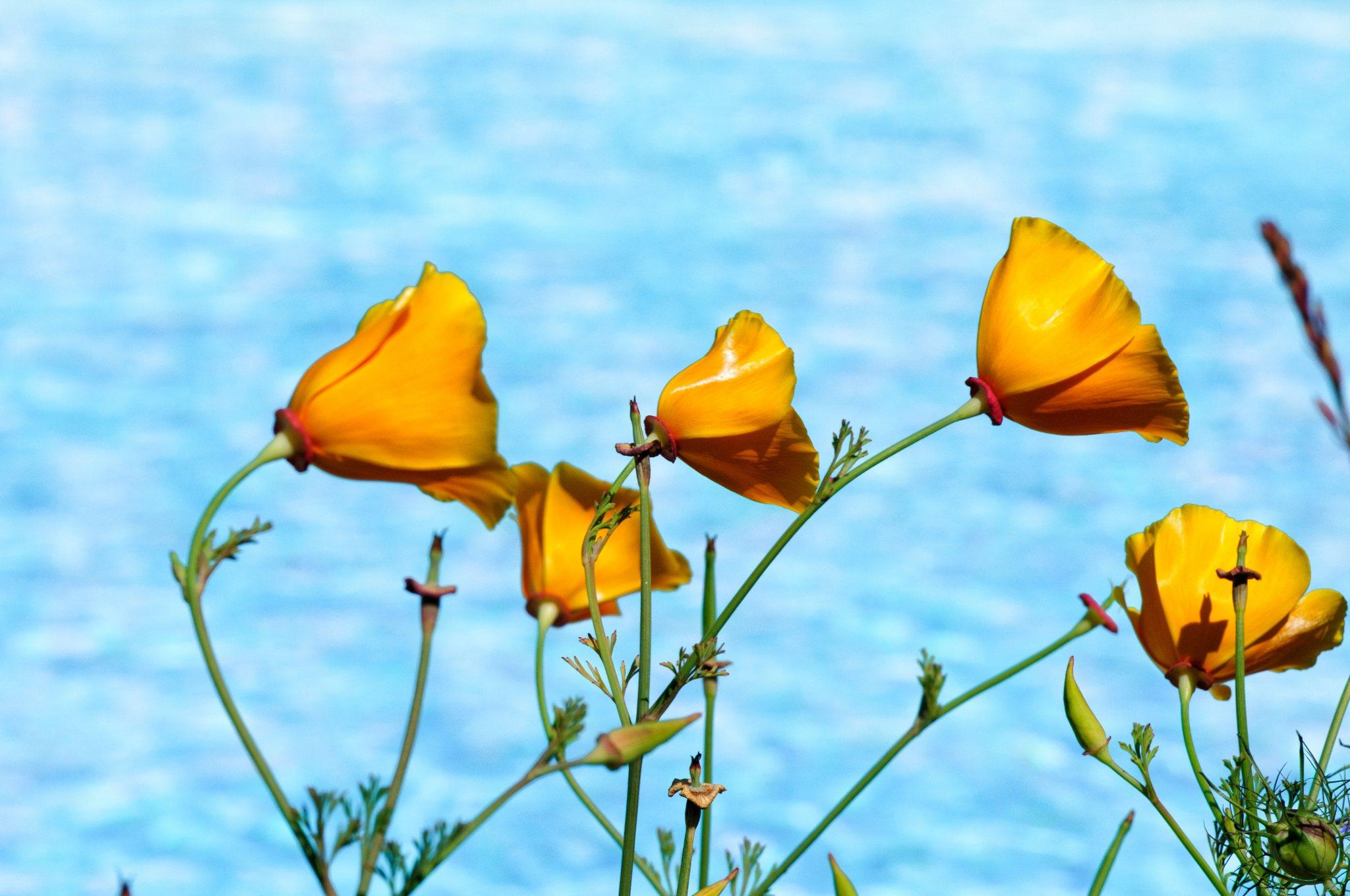 bronces_fleurs-17.jpg