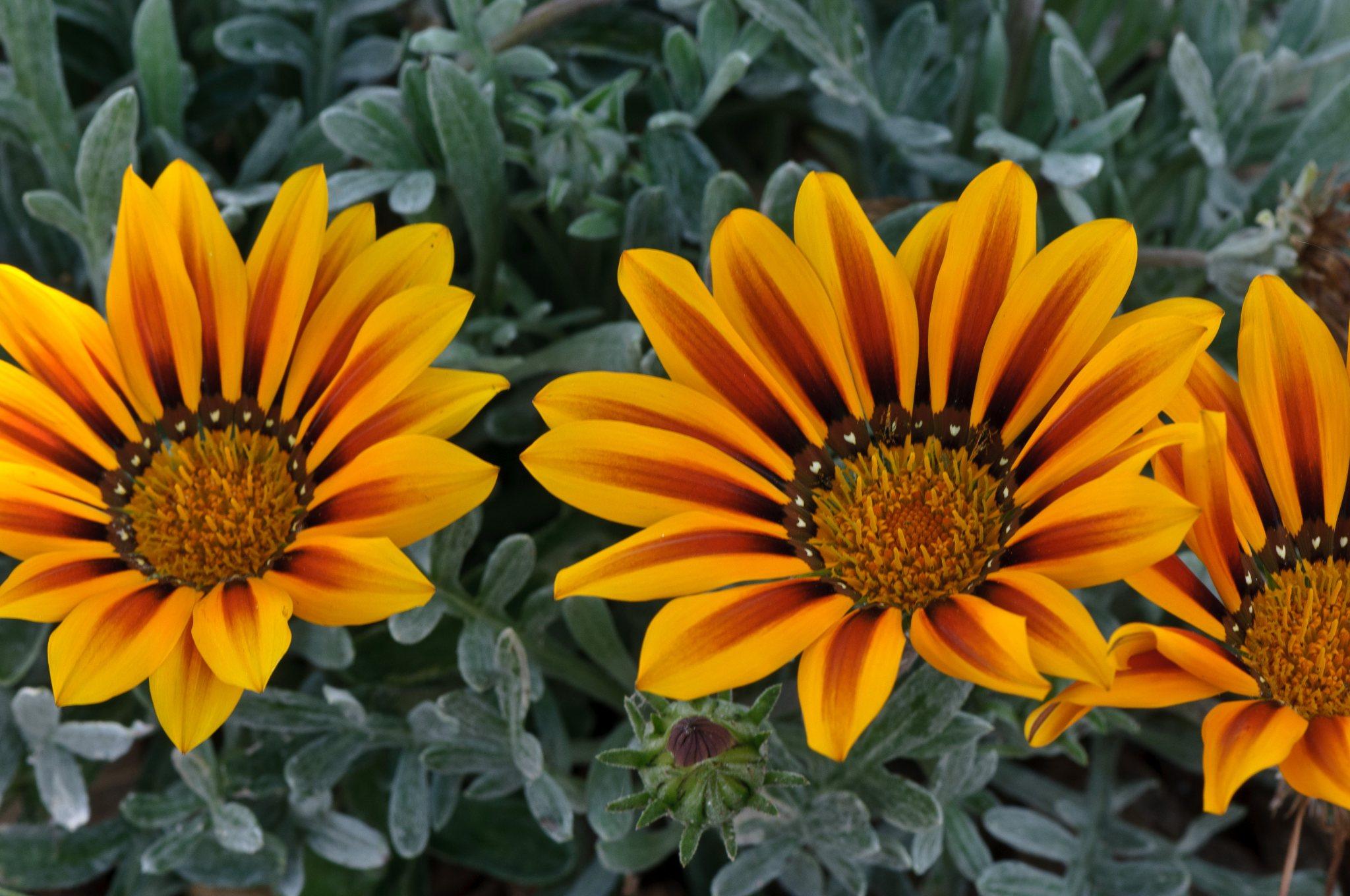 bronces_fleurs-19.jpg