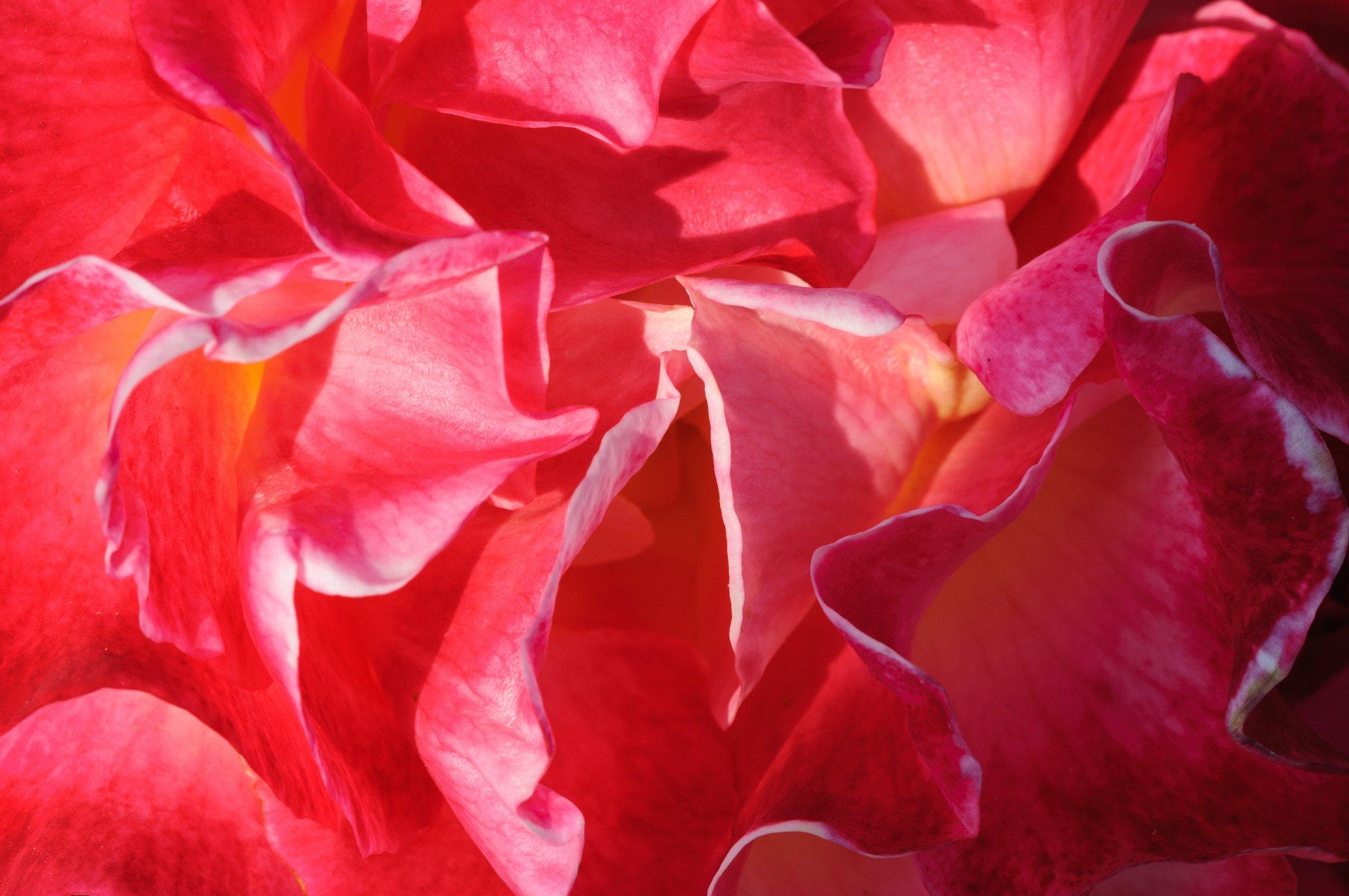 bronces_fleurs-2.jpg