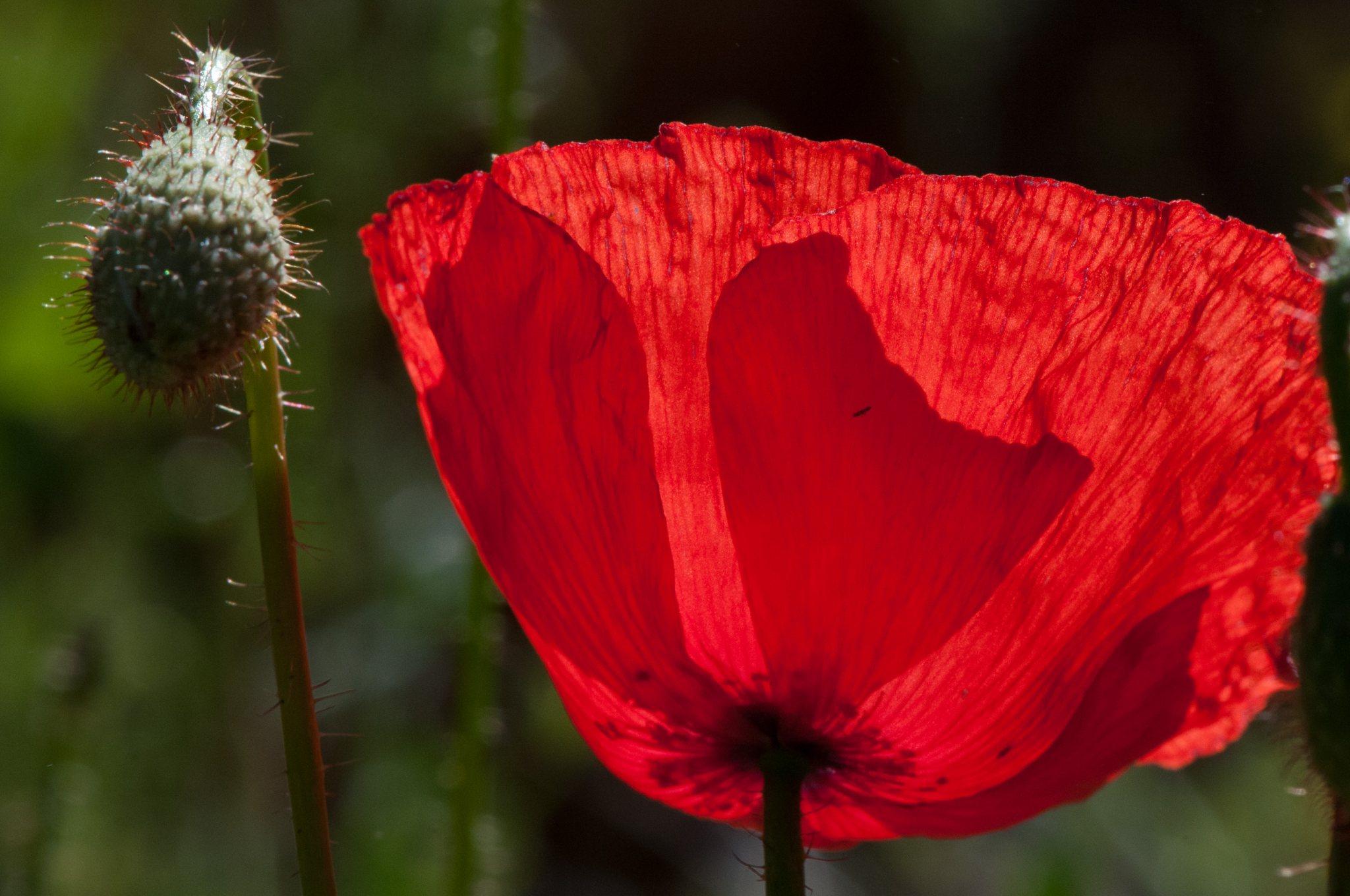 bronces_fleurs-8.jpg